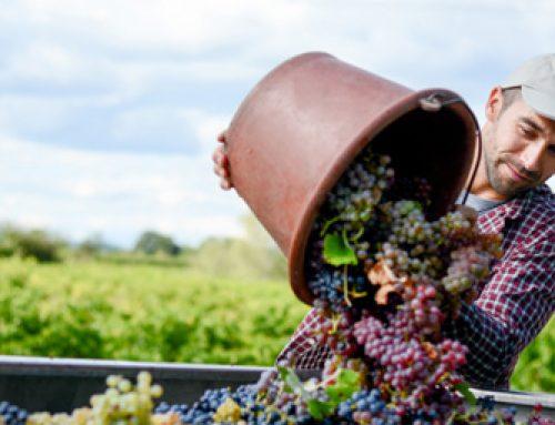 Partnerstvo Vinarta za Slovenijo