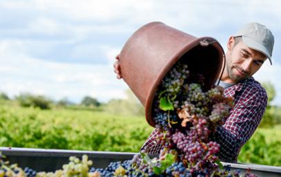 Vinart Slovenija
